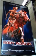 Play in the City : The Buzz About Body Worlds