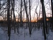 Wooded_sunset