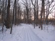 Wooded_trail